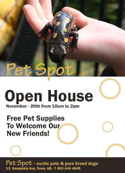 "Illustration – Flyer Designed With Adobe Illustrator – ""Pet Spot"""